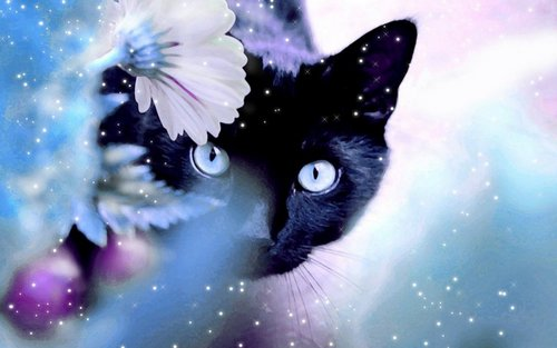 Beautiful Cat - cats Wallpaper