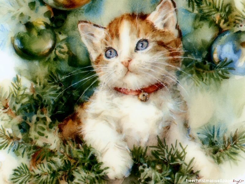 Christmas Images Christmas Cat Hd Wallpaper And Background Photos