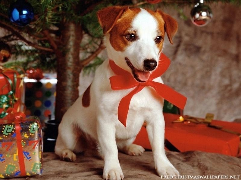 Immagini Natalizie Con Cani.Animali Buffi E Divertenti Cani Di Natale
