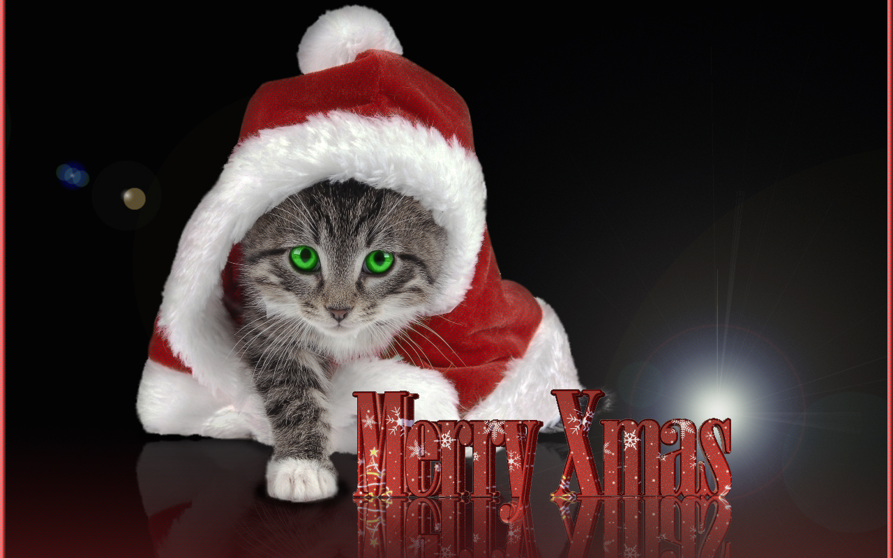 christmas kitten wallpaper 2017 - Grasscloth Wallpaper