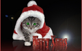 kittens - Christmas Kitty wallpaper