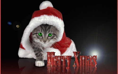 Christmas Kitty - kittens Wallpaper