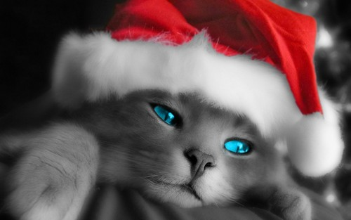 Kittens wallpaper possibly with a tom, a kitten, and a cat called Christmas Kitty