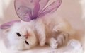 kittens - Cute Kitten Wallpaper wallpaper