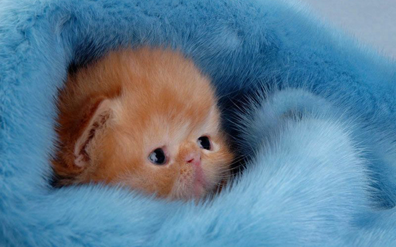 Kittens cute kitten wallpaper