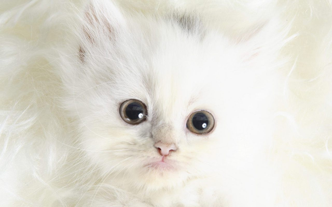 Kittens Images Cute Kitten Wallpaper HD And Background Photos