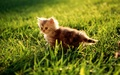Cute Kitten - kittens wallpaper