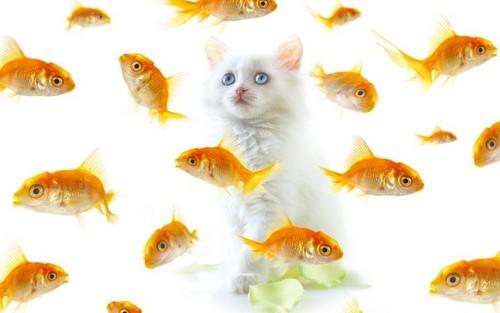 Kittens wallpaper containing a goldfish titled Cute Kitten
