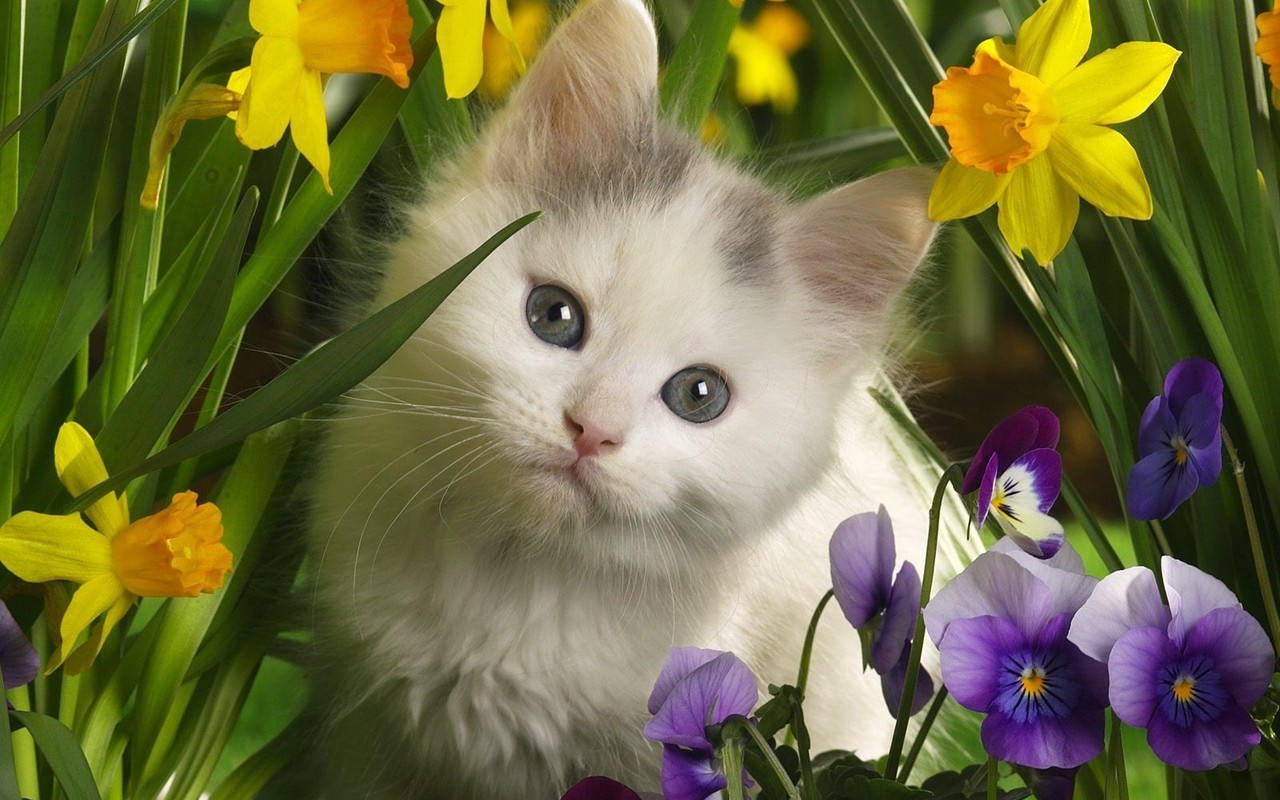cute free pictures Cute Kittens