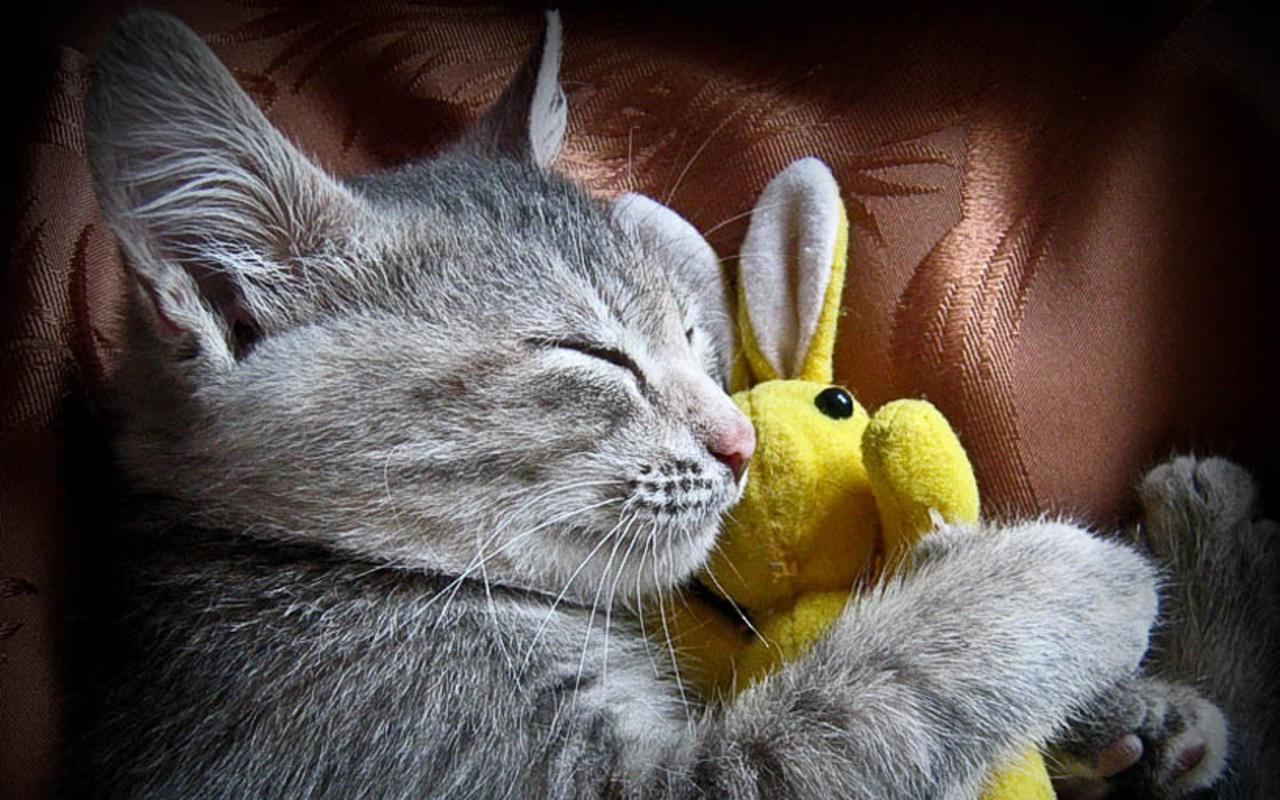kitten pics cute