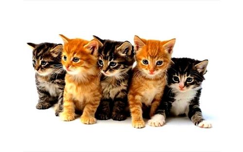 gattini teneri