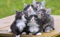 Cute Kittens - kittens wallpaper