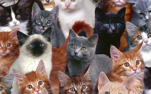 mèo con đáng yêu