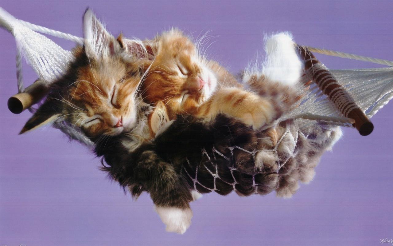 Kittens cute kittens
