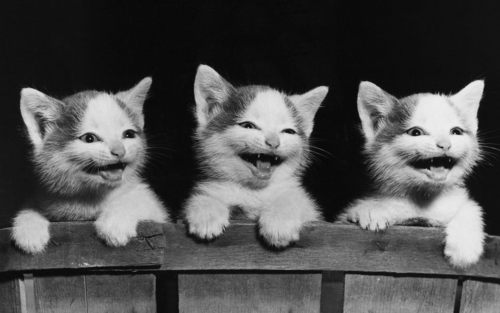 Kittens Wallpaper Entitled Cute