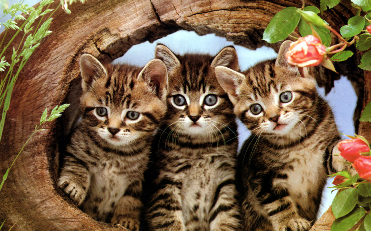 kittens images cute kittens hd wallpaper and background