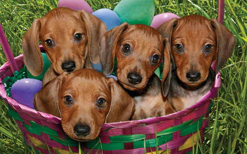 Cute Puppies - puppies Wallpaper