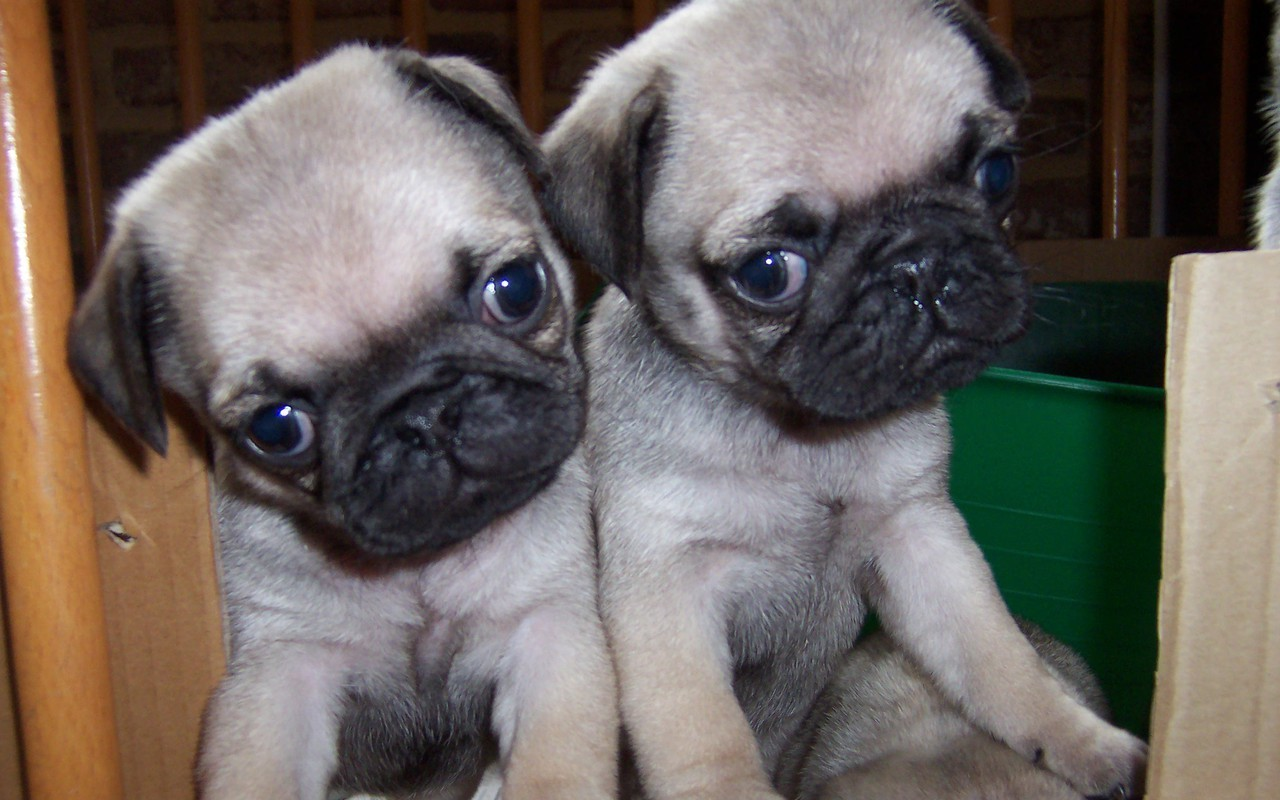 Puppies images Cute Puppies HD wallpaper and background ...
