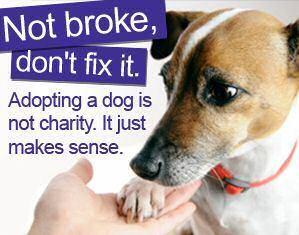 It makes sense to adopt :)