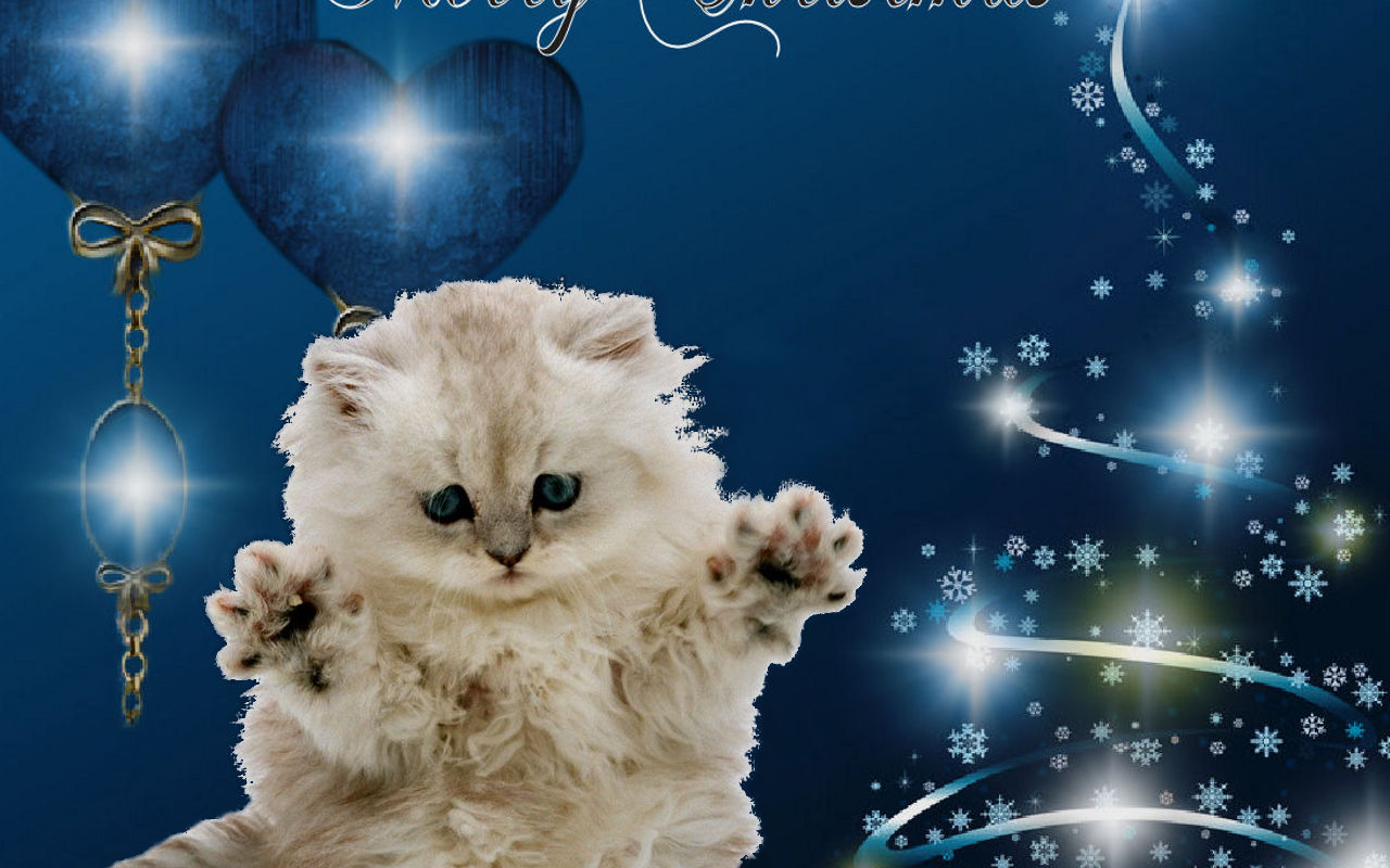 Christmas Images Merry Christmas Cat Hd Wallpaper And Background