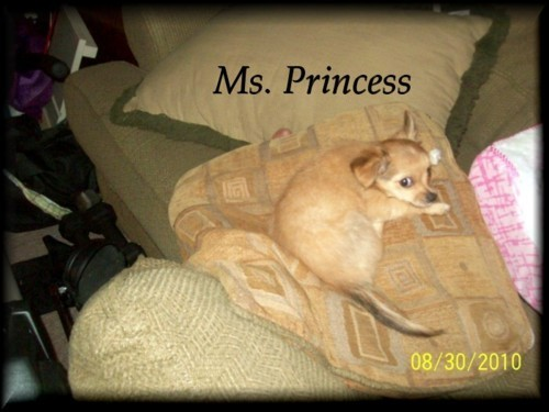 MsPrincess laying on pillow
