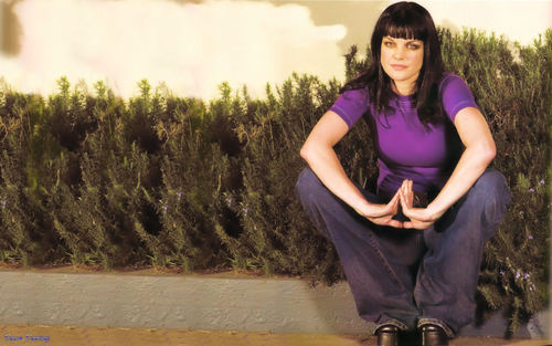 pauley perrette wallpaper with a grainfield titled Pauley Perrette