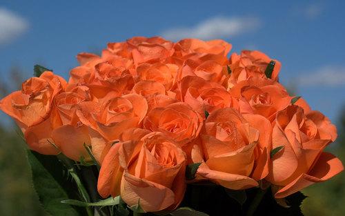 Pretty Rosen