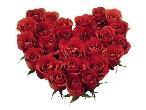 Pretty hoa hồng