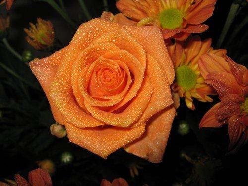 Pretty mawar