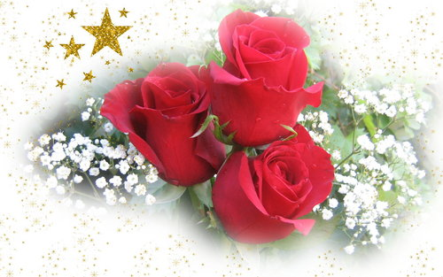 Pretty rosas