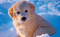 Sweet Puppy - puppies wallpaper