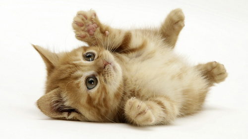 Cats images ... HD wallpaper and background photos