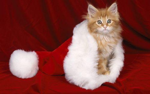 クリスマス Kitty