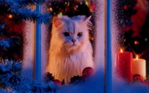 natal Kitty