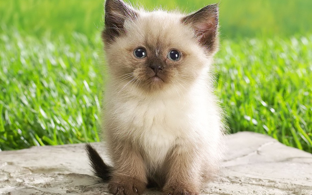 Kittens Cute Kitten  Kitten