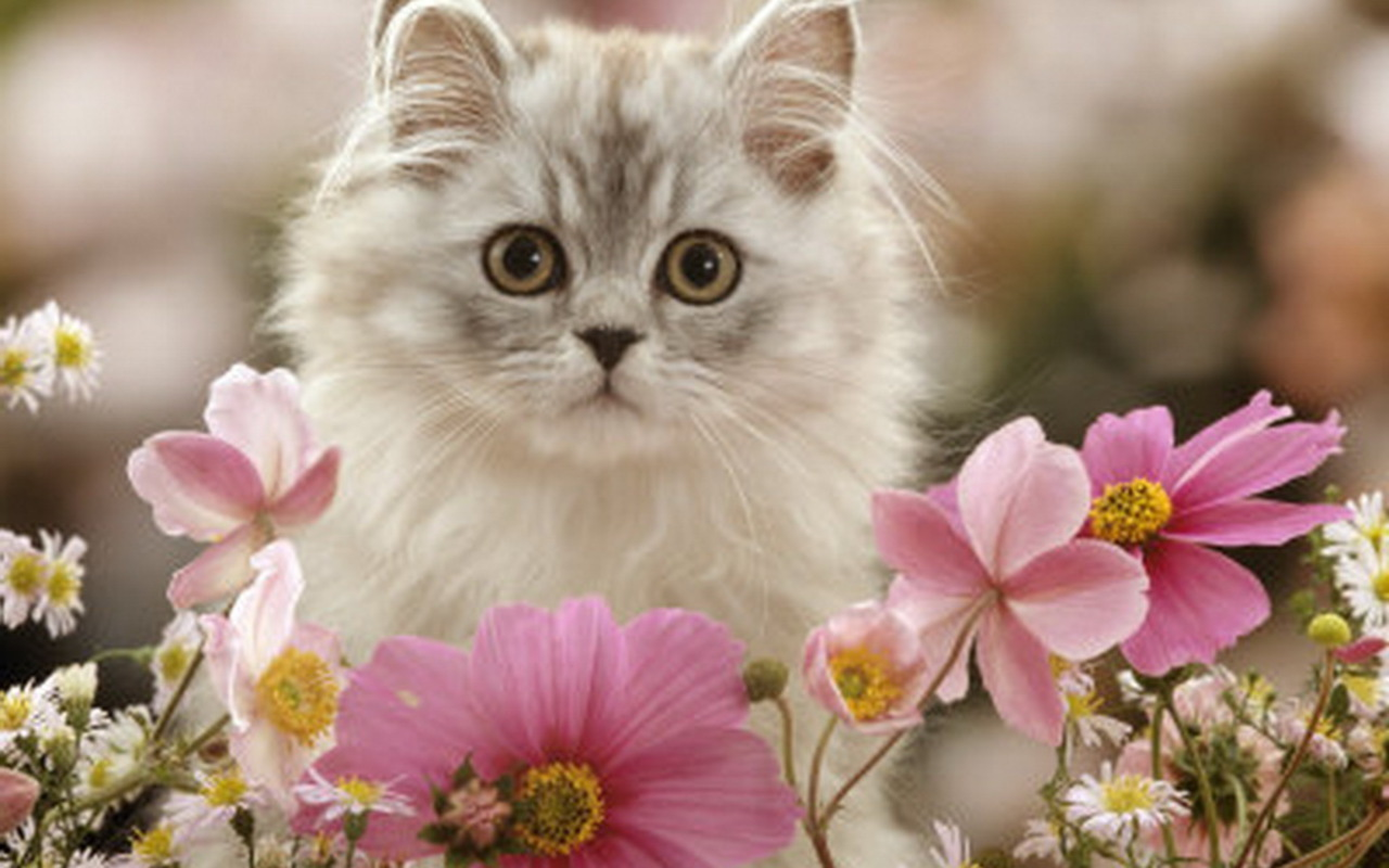 kittens images cute kitten hd wallpaper and background