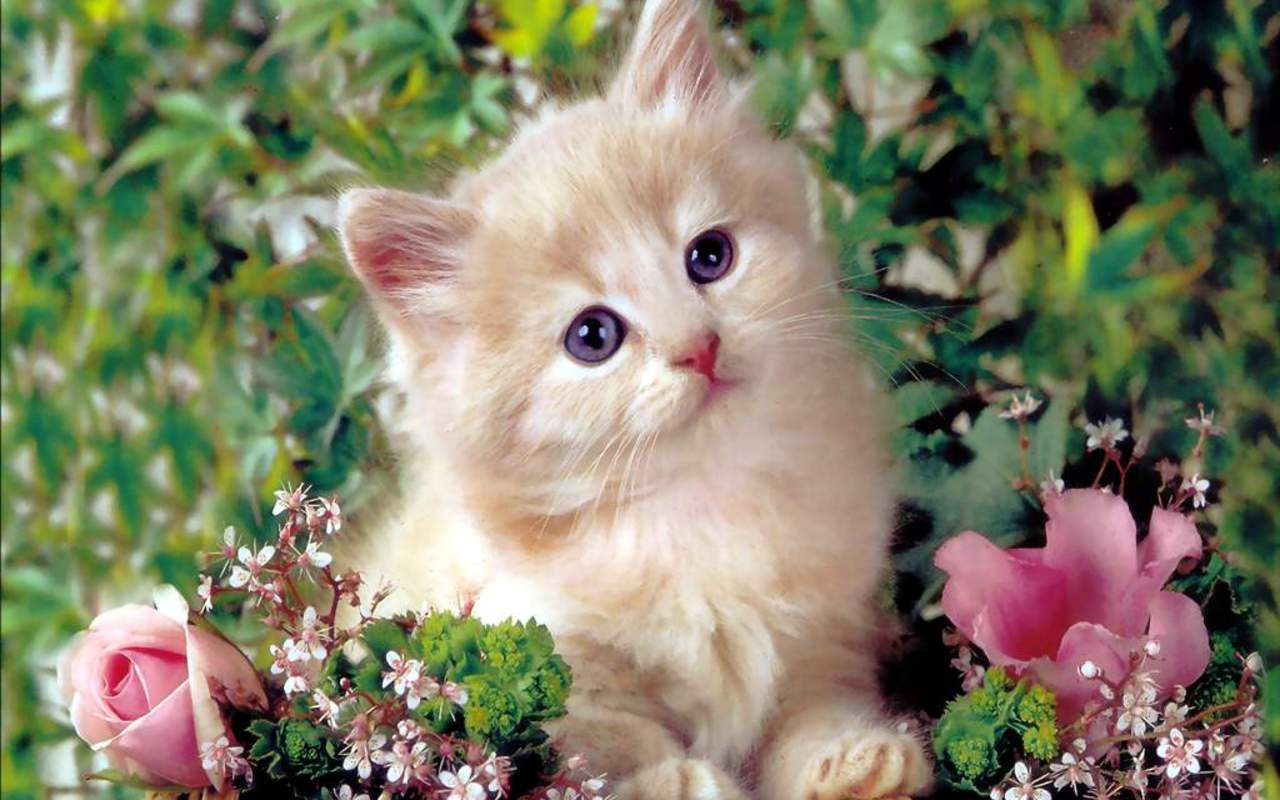 Kittens images Cute Kitten HD wallpaper and background photos