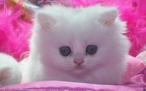 Kittens wallpaper titled Cute Kitten