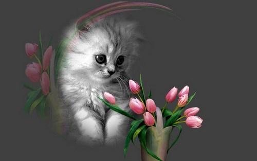 小猫 壁纸 called Cute Kitten