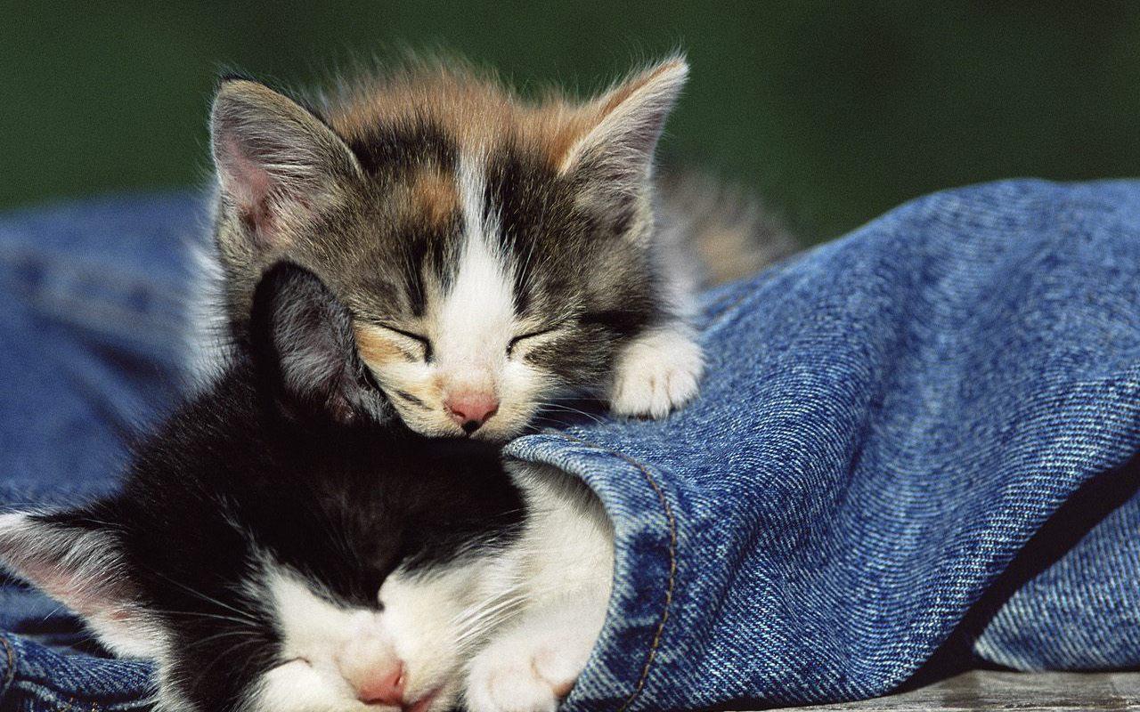 a cute kitten