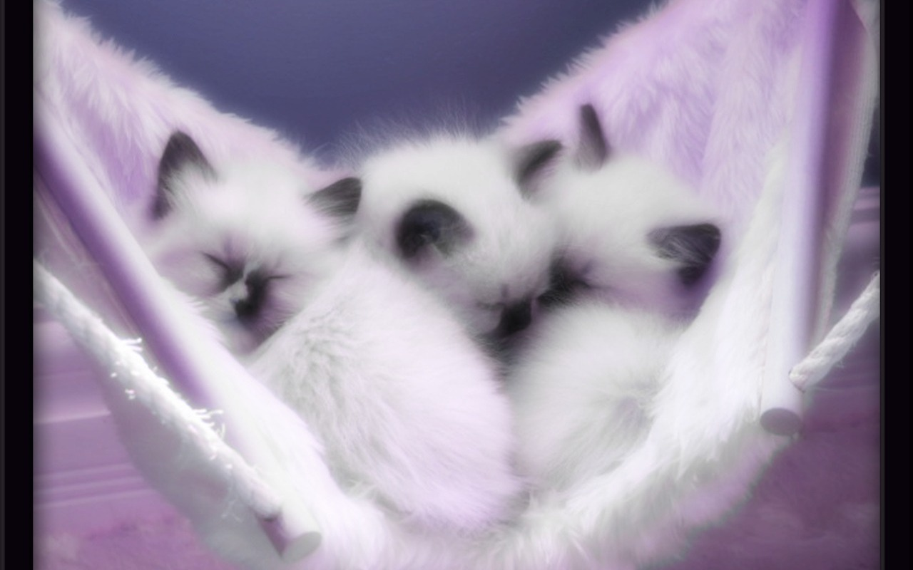 Cute kittens kittens wallpaper 16123924 fanpop - Kitten backgrounds ...