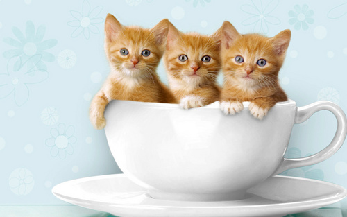 Kittens Wallpaper Possibly With A Demitasse Coffee Break And Teacup Entitled Cute