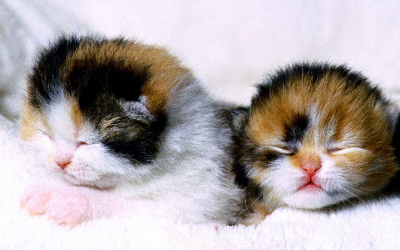 Cute Kittens - Kittens Wallpaper (16155779) - Fanpop