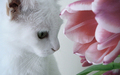Daydreamer - cats wallpaper