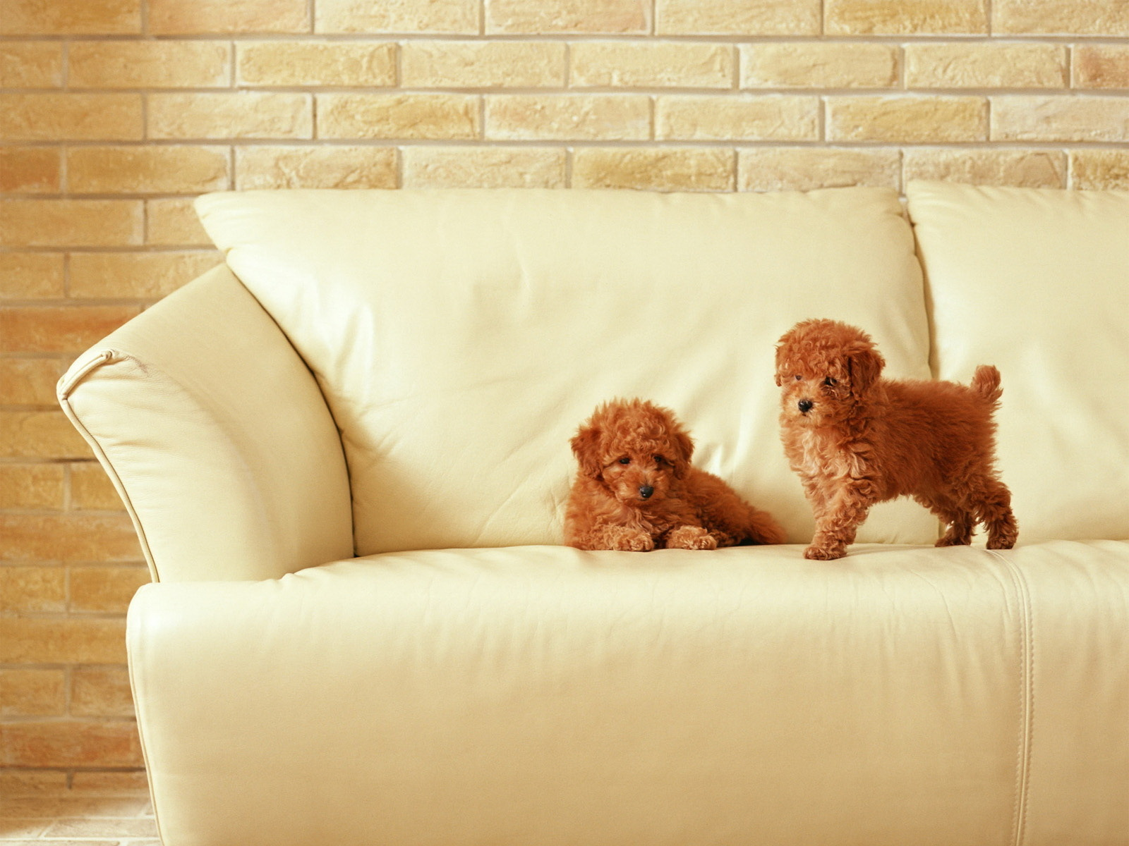 Dogs Dog Wallpaper