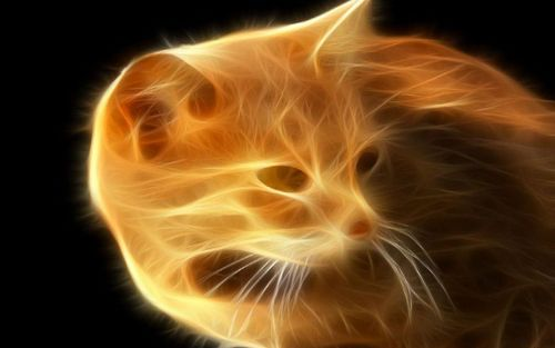 Fire Cat - cats Wallpaper