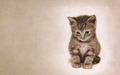 Kitty Misses You - kittens wallpaper