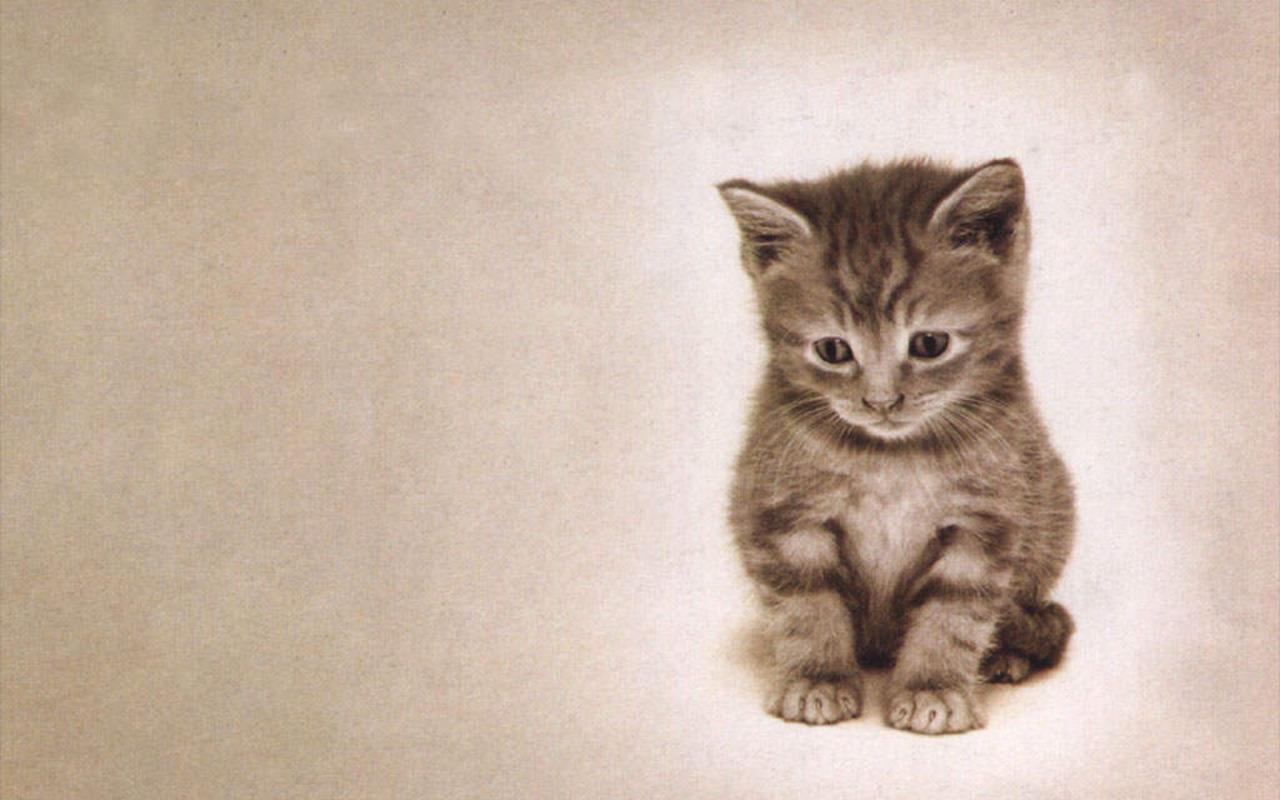 Kitty Misses 你