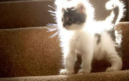 Sunshine Kitty