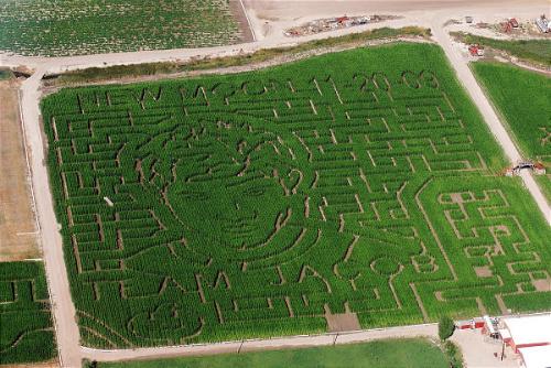 Team Jacob кукуруза maze :D